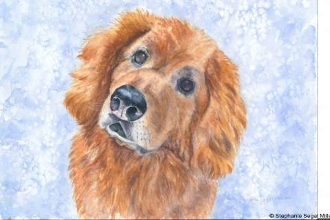 Pet Portrait GoldenRetriever.BassetHound