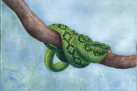 Snake-bright-1