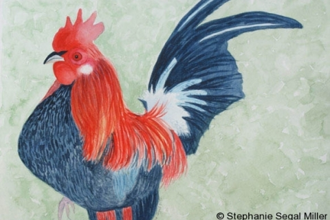 13-Rooster