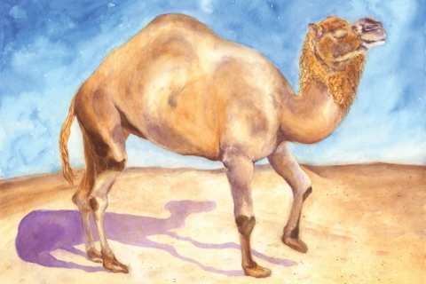 Camel Cape May Zoo 12x16 watercolor