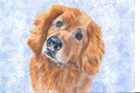 Pet-Portrait-GoldenRetriever.BassetHound