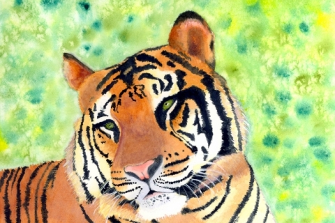 SSMiller-Watercolor-Tiger-Bali-200-DPI