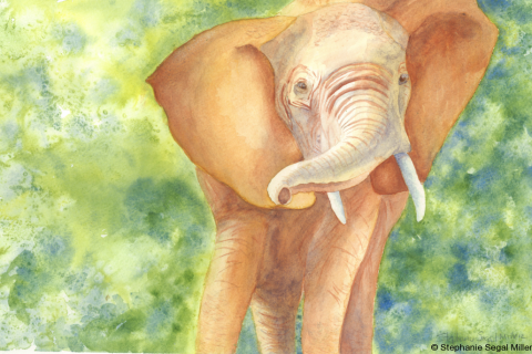 Elephant Tanzania watercolor 12x16