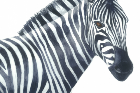 Zebra South Africa watercolor