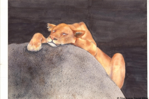Lioness Tanzania watercolor 12x16