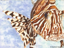 Lionfish-Bella-WC-SSM-77834