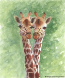 Giraffes watercolor