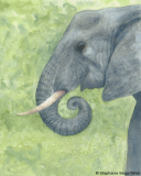 Elephant watercolor SSM