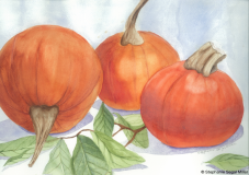 Pumpkins watercolor Stephanie Segal Miller